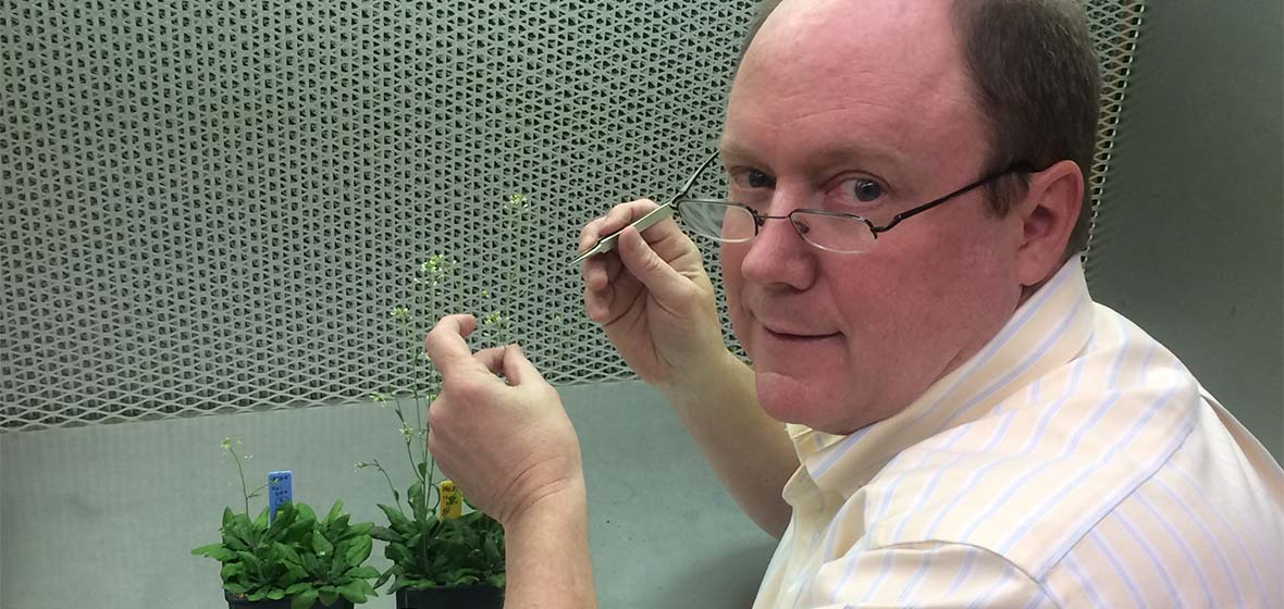 Jeffrey Harper in the lab working with plants