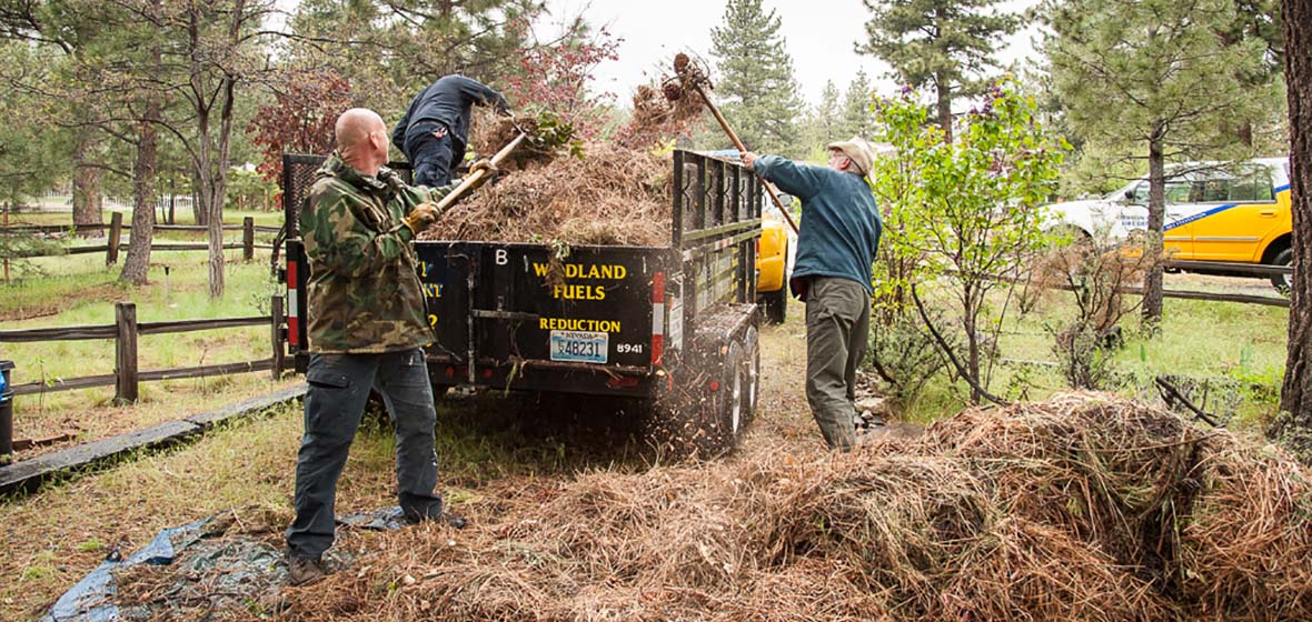 Men loading pine needles into truck