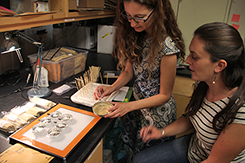 Beth Leger and Allison Agneray study seeds in the lab
