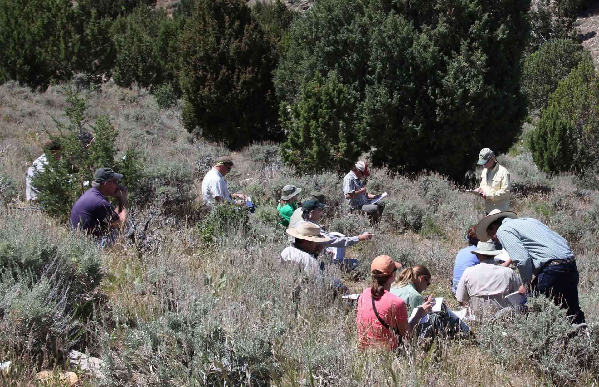 A group of researcher in the brush during a field workshop
