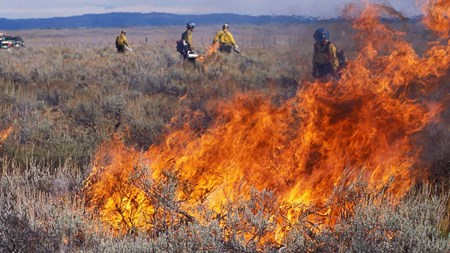 Firefighters working amongst brush during a controlled burn with large flames in the foreground