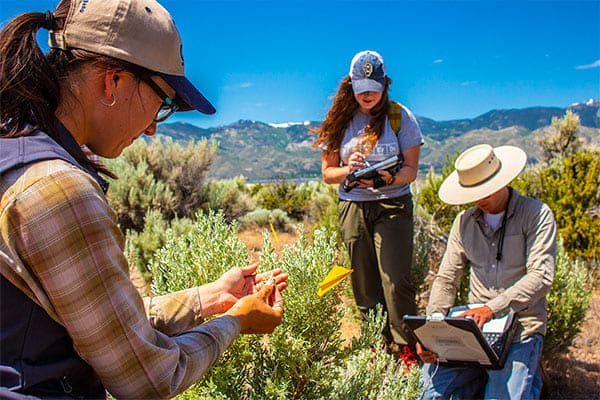 Rangeland Ecology Lab researchers collect data on a range.