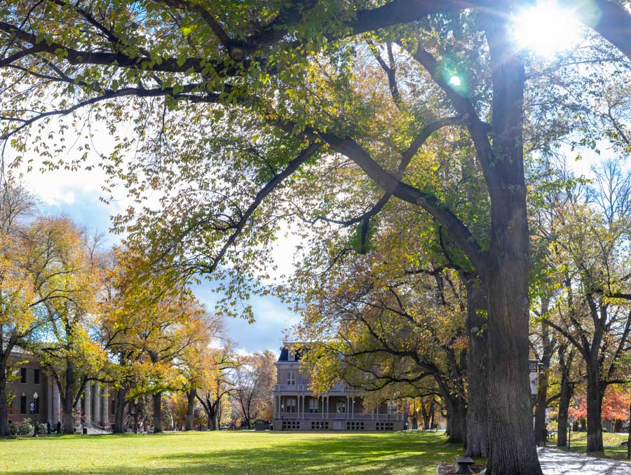 The quad on a fall day, with Morrill Hall in the background and sun peeking through the trees lining the green area