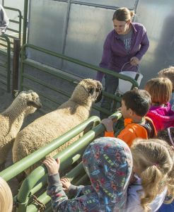 Students visit sheep at University farm