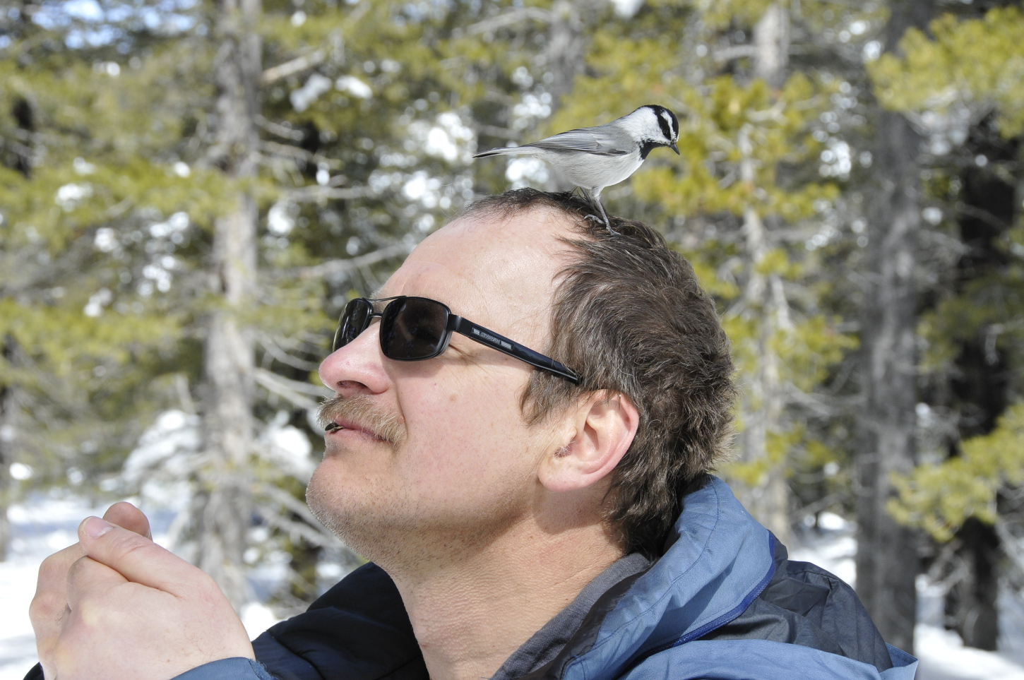 Vladimir Pravosudov in the field, with a chickadee on his head.