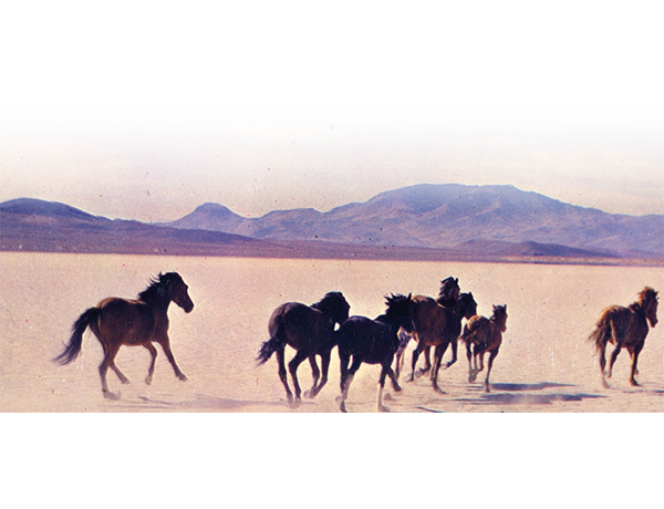 Horses running across the Nevada Desert