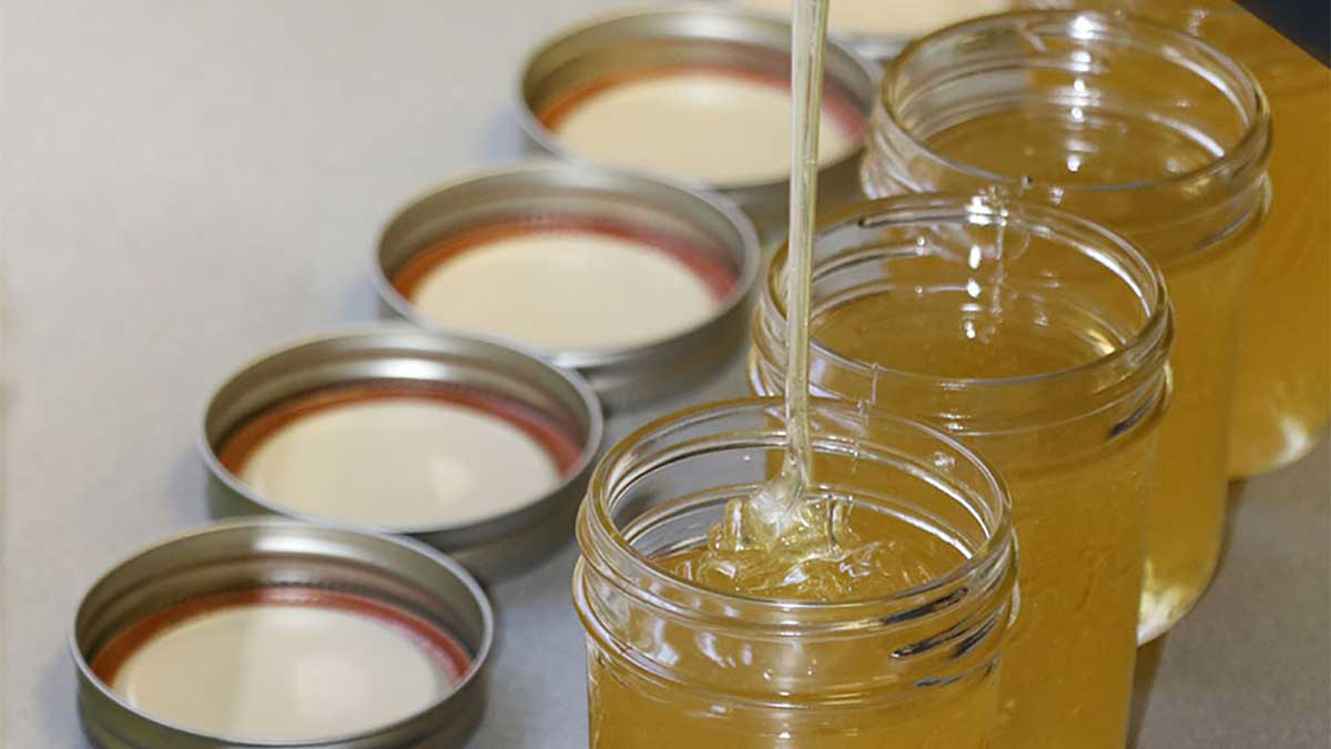 Honey being poured into jars