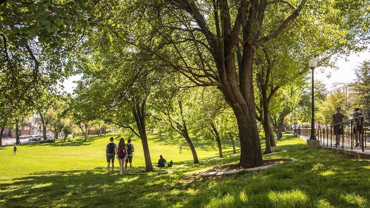 A group of students walk together on campus on a sunny day across a luscious lawn shaded by towering trees. On a nearby sidewalk, students pass by.