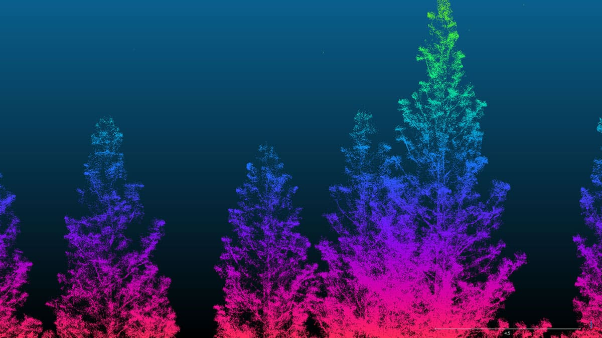laser scan of trees with trees looking rainbow-colored