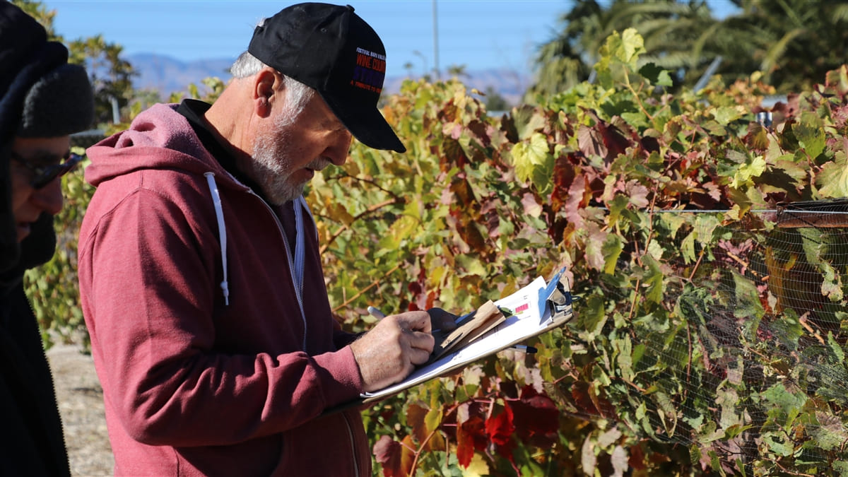 Man standing next to grapes while writing notes on clipboard