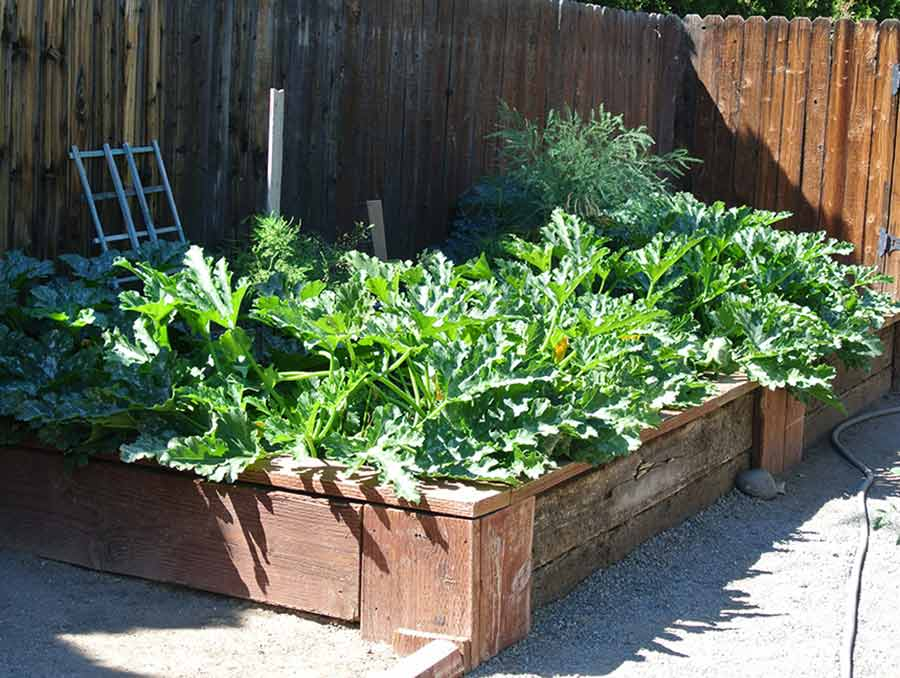 plants in raised garden bed