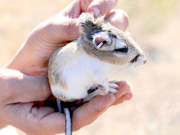 Student Resources Ecology Evolution And Conservation Biology Graduate Ph D Program University Of Nevada Reno