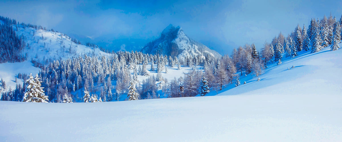 A snowy mountain landscape with pine trees an untouched powder.
