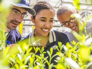 Close-up of three students looking at plants in a University greenhouse
