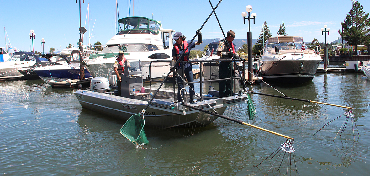 tahoe invasive fish removal research