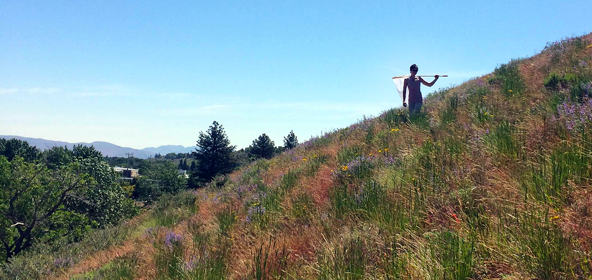 Hunting for bees on a hillside