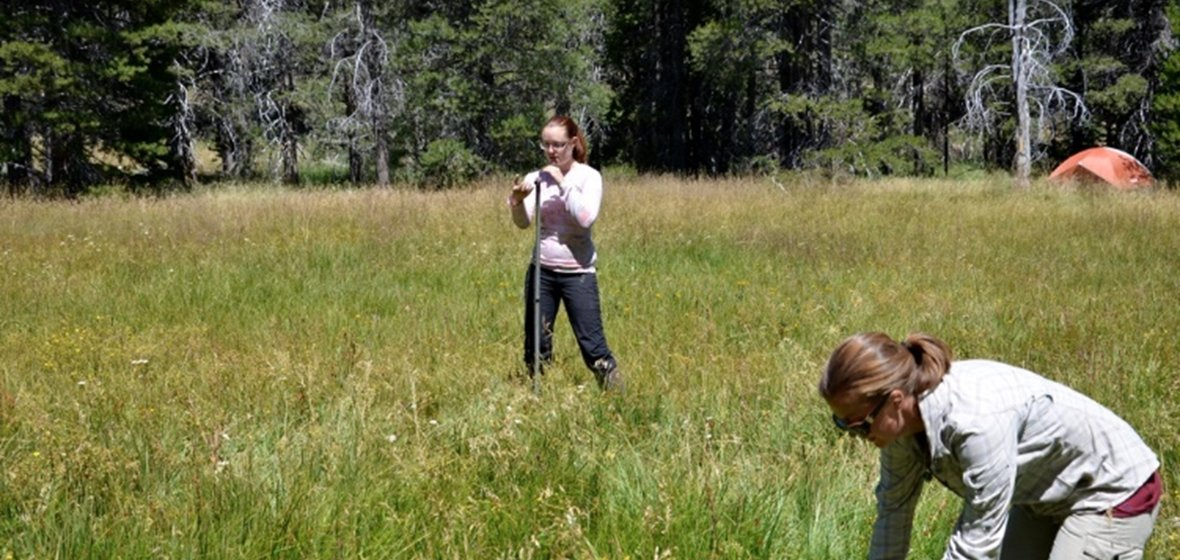 Researchers in a grassy field