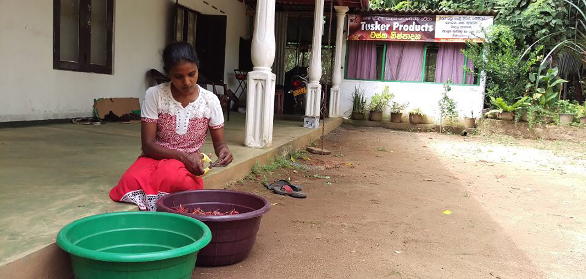 A woman is sitting down and cutting peppers to be made into spices at Tusker Products in Waga, Sri Lanka.