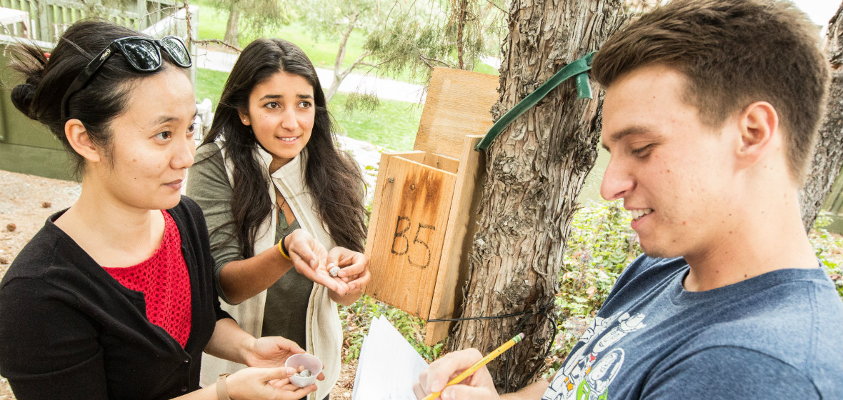 Two students and a professor examine a bird's nest box.