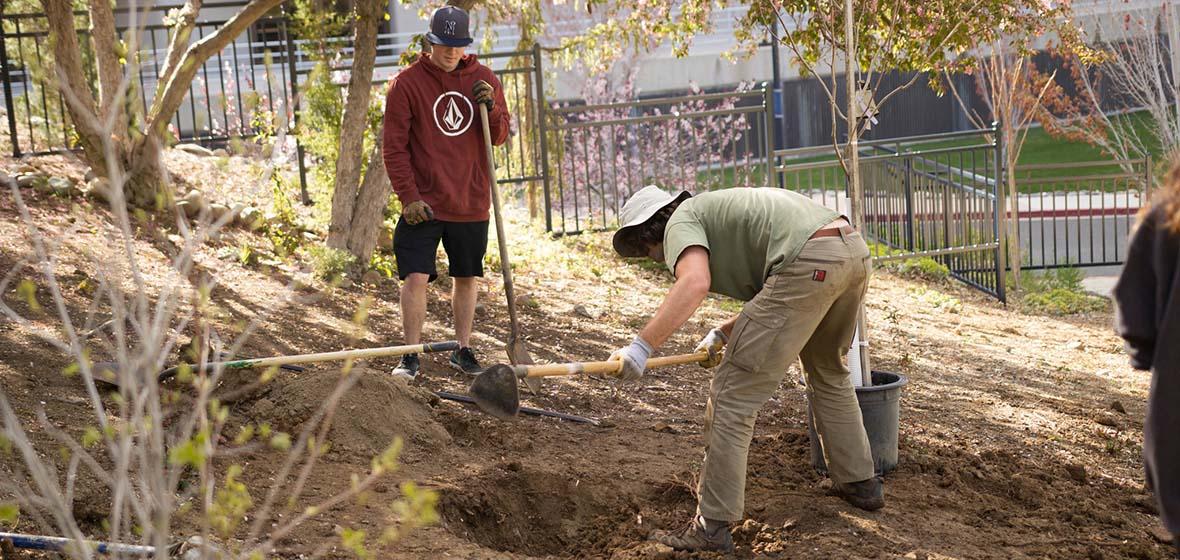 Two volunteers planting trees