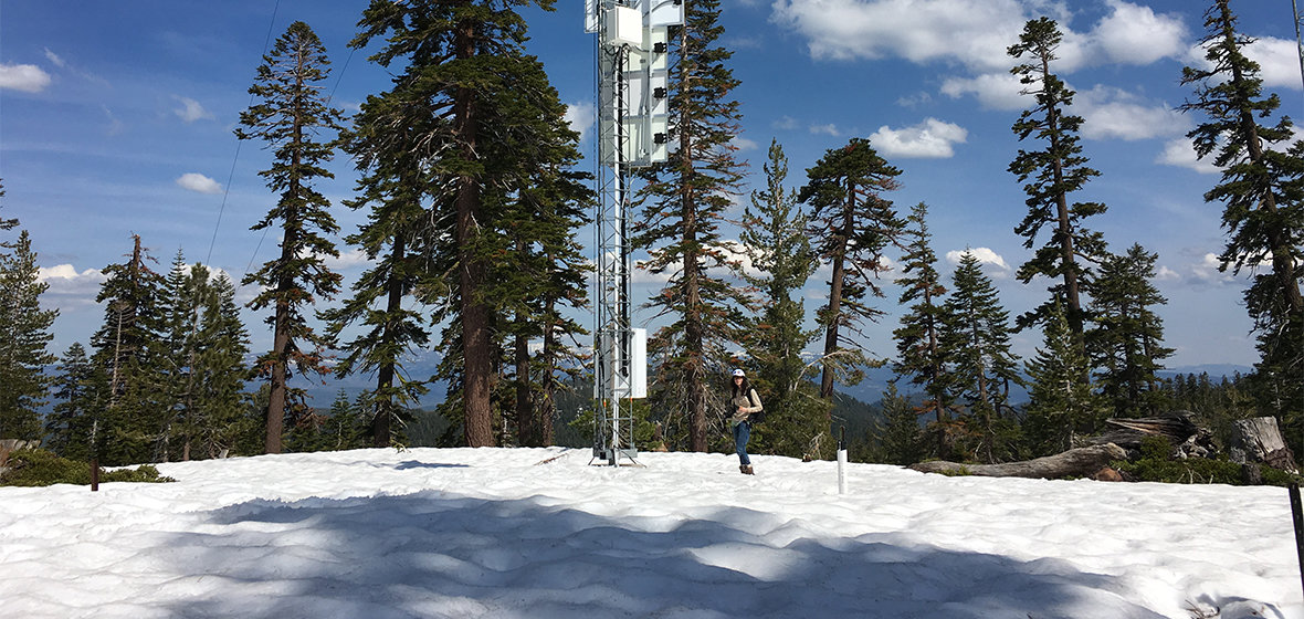 Rose Petersky standing in the snow surrounded by pine trees