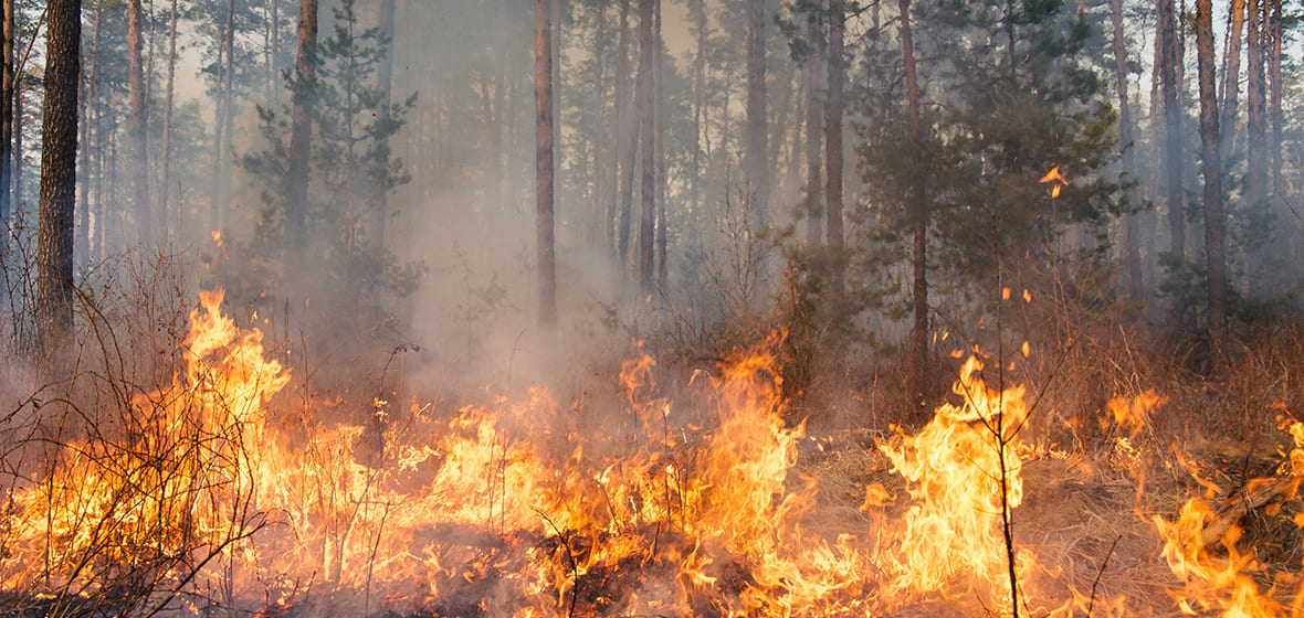 Wildfire burns in a forest