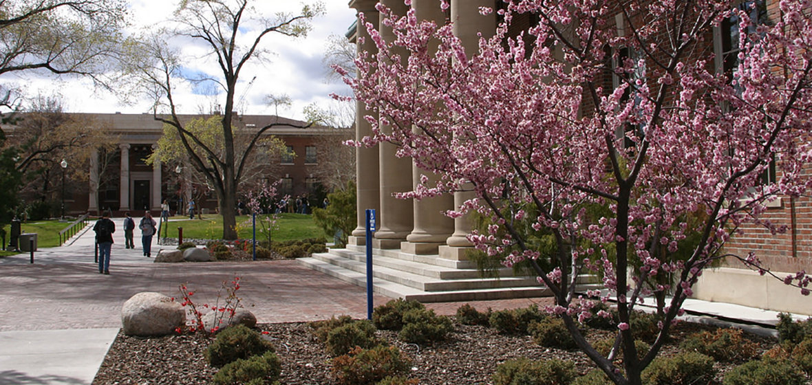 Trees bloom during spring on the University of Nevada, Reno campus