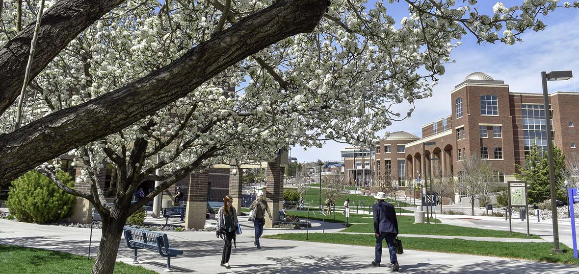 A cherry blossom tree blooms and a few people in the distance walk through the University of Nevada, Reno campus with a large, brick building in the background.