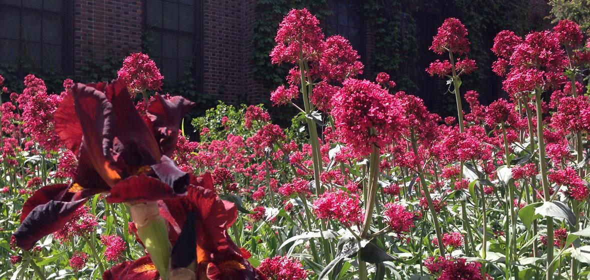 flower bed in bloom