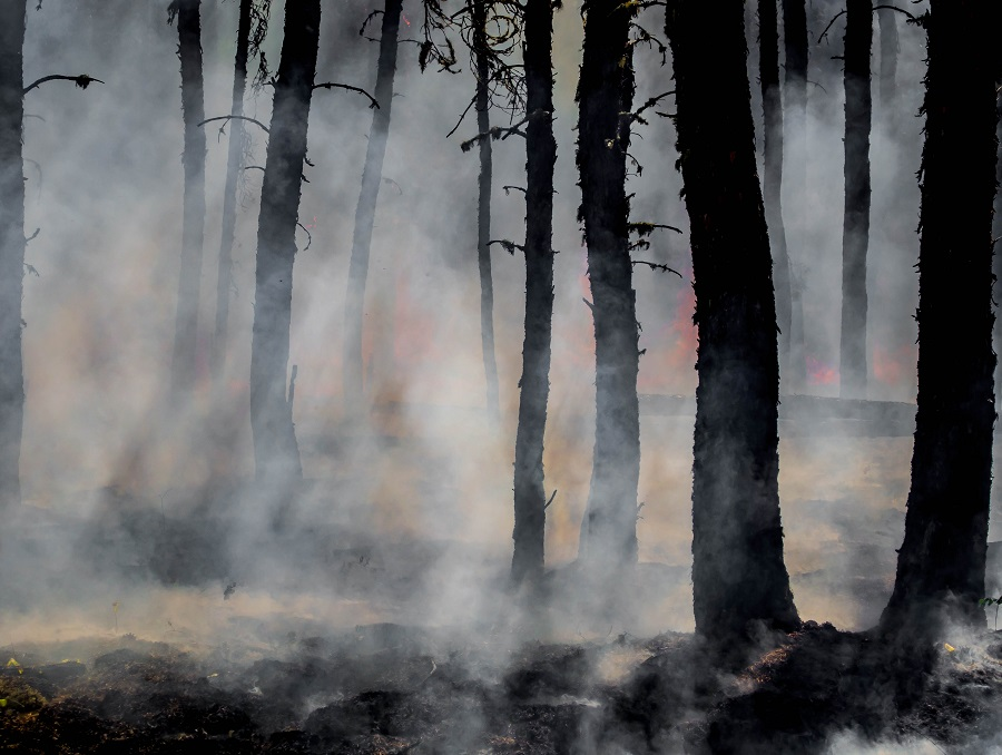 A burning forest with blackened trees, clouds of smoke, and flames in the background