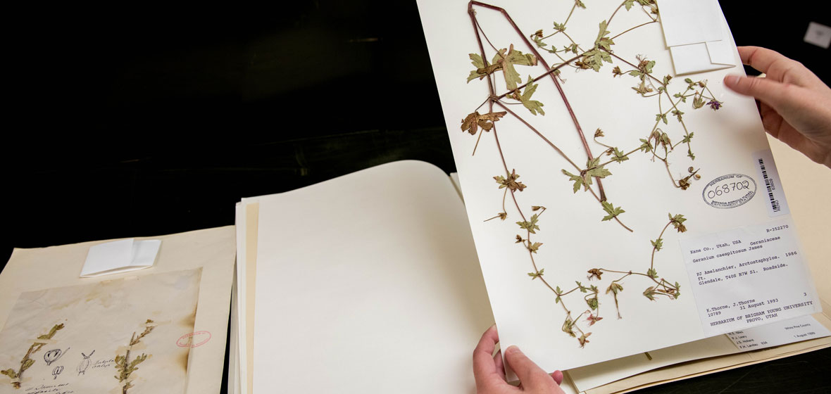 Someone looking through a book of pressed plants and flowers. Hands are visible holding up a page.
