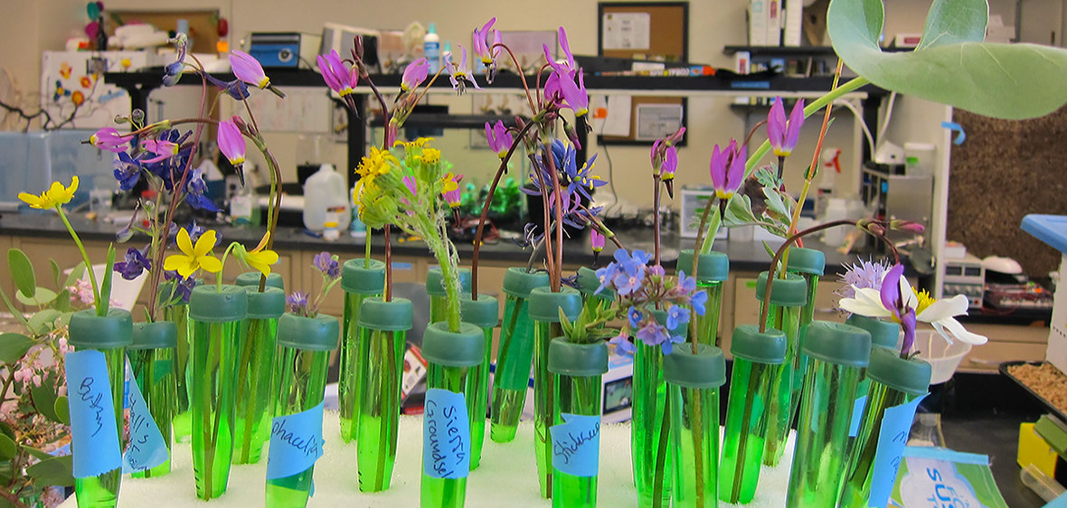 Wildflowers in the lab