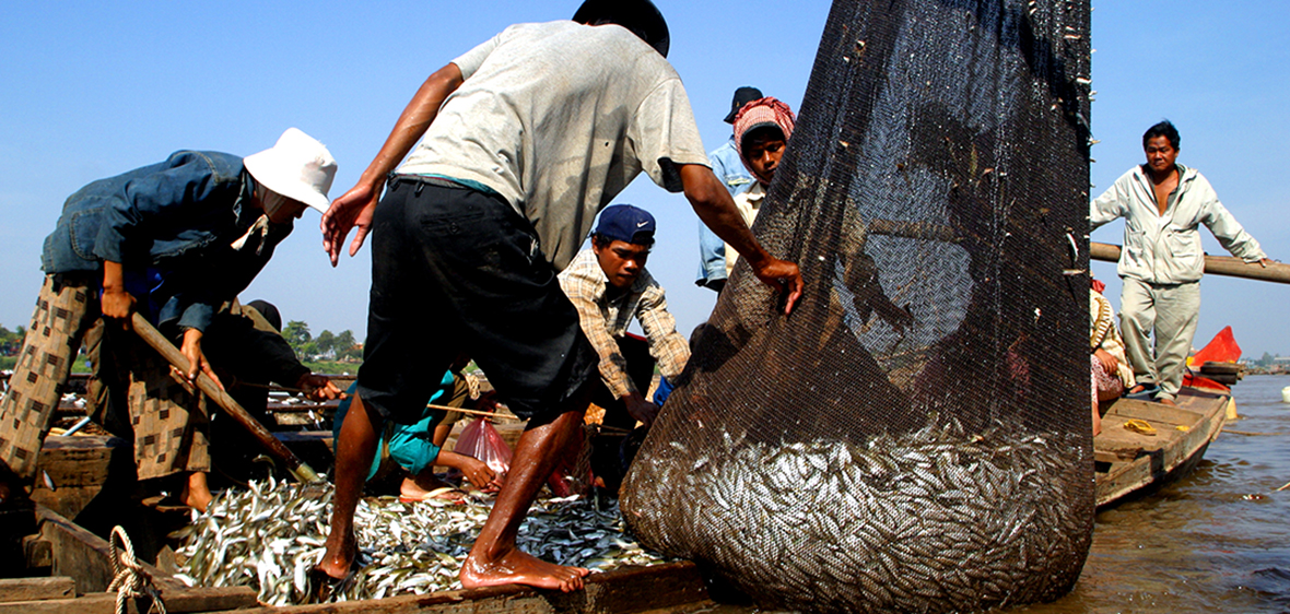 unloading fish nets on the Tonle Sap River in Cambodia