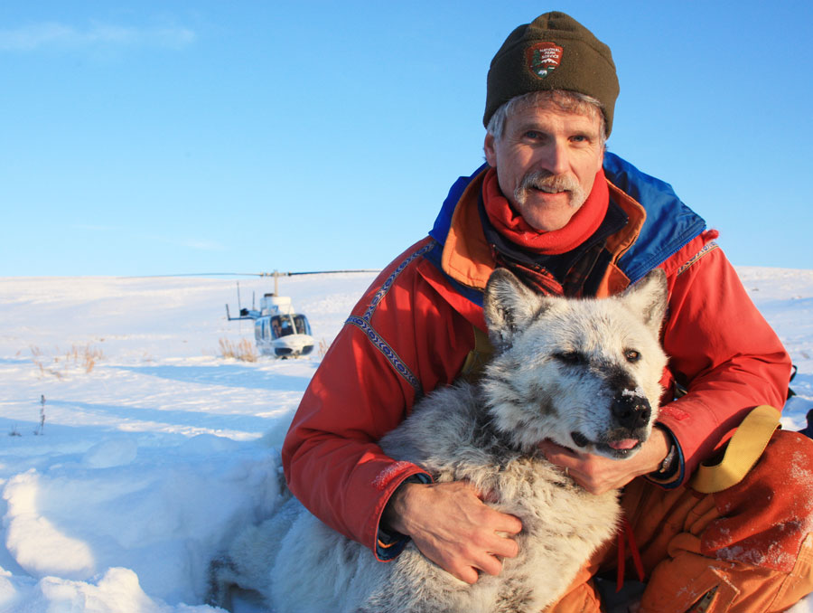 Doug Smith posing for a photo with a gray wolf in snowy Yellowstone National Park.