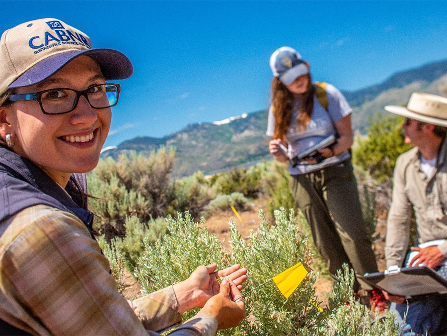 Rangeland Ecology & Management students collecting plant and soils data on a range.