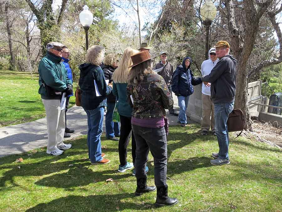 Participants of tree walk identifying a tree