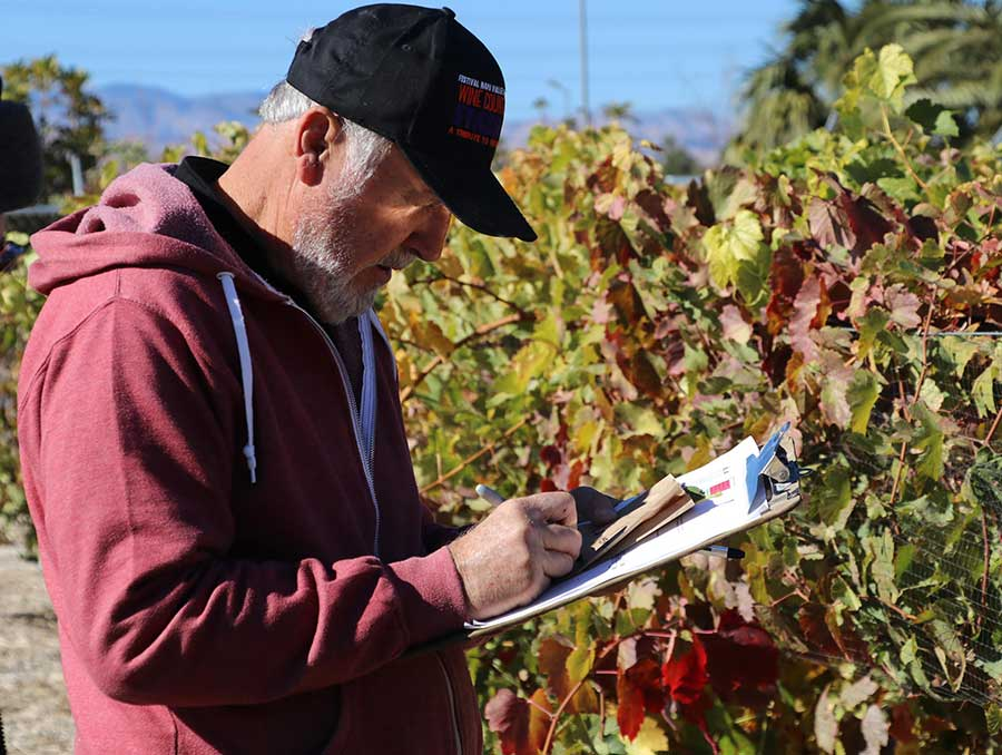 Master Gardener Don White inspecting grapevines and taking notes on clipboard