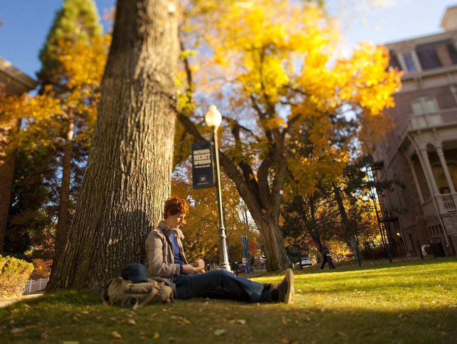 A student takes notes sitting under a large tree on the University Quad. Morrill Hall is in the background, and it is autumn, so the leaves are changes.