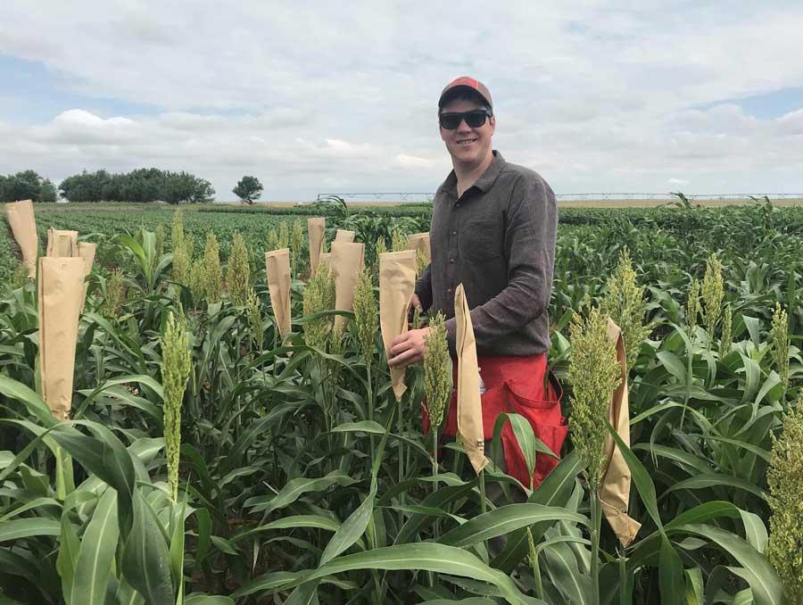 Graduate Student John Baggett standing in a field of sorghum stalks