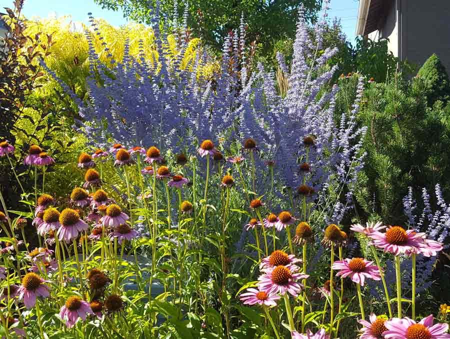 a garden of native flowers