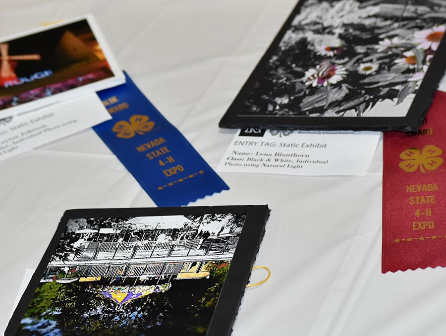Photos on a table next to 4-H award ribbons