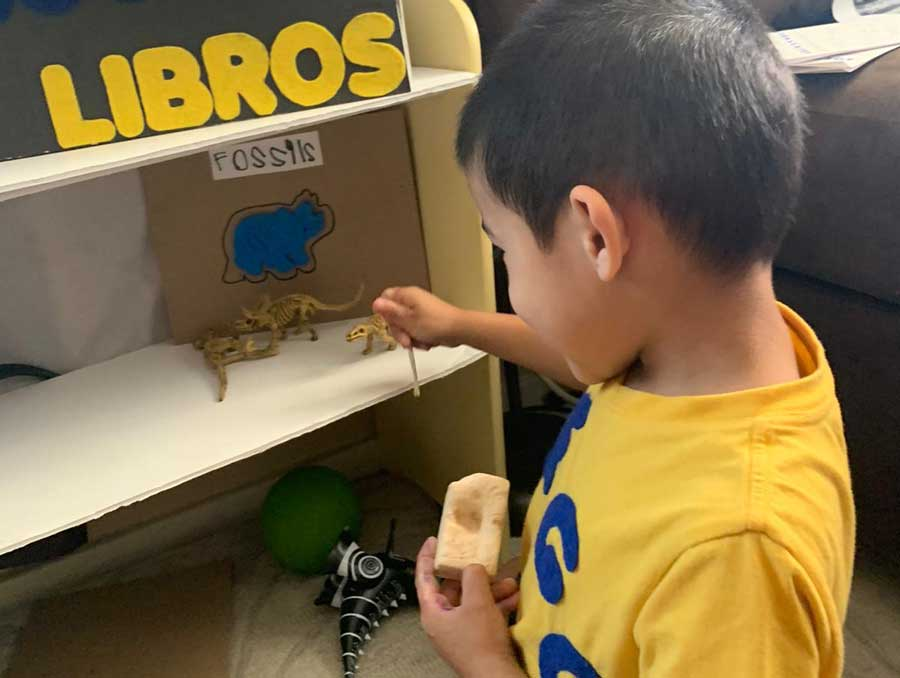 Boy placing toy dinosaurs and fossils on a shelf labeled fossils