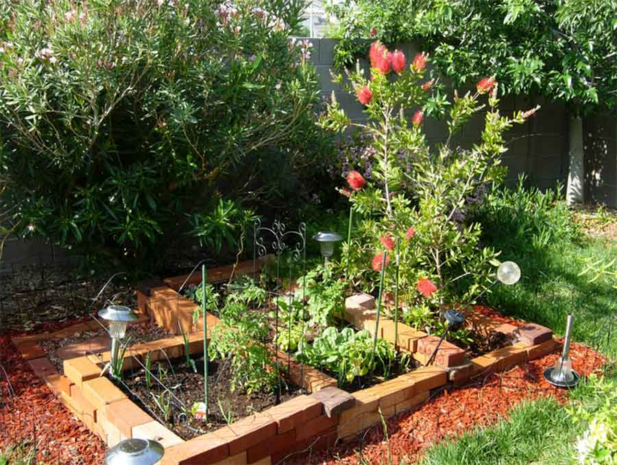 Raised garden bed with various plants
