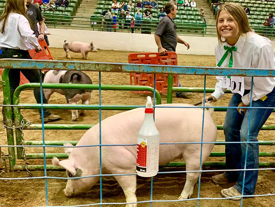 4-H girl posing with her pig at a livestock show