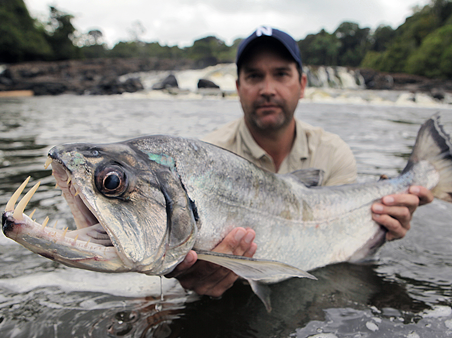 Zeb Hogan holding Payara in rewa river