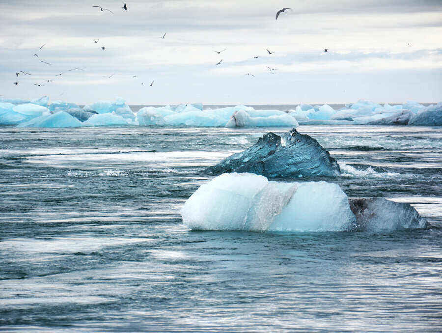 Image of several melting pieces of ice on a warming ocean with birds flying overhead