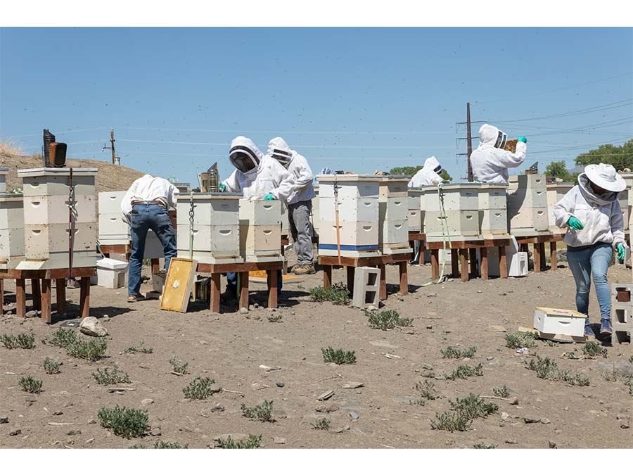 Student beekeepers work in apiary.