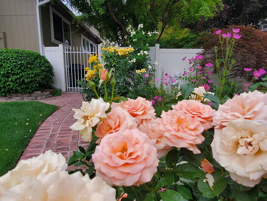 Pink flowers lining a brick walkway.