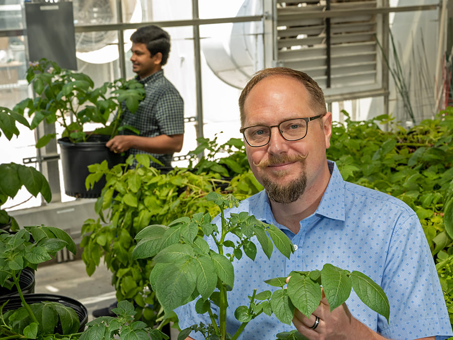 dylan kosma in greenhouse with potato plants