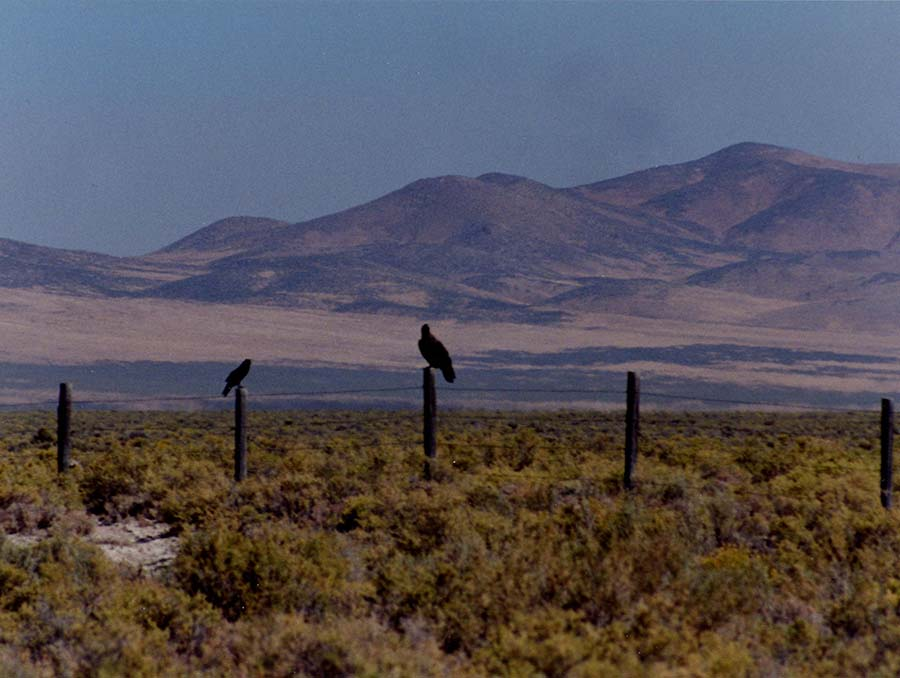Dann Ranch landscape image with crows on fence posts in foreground and mountains in background